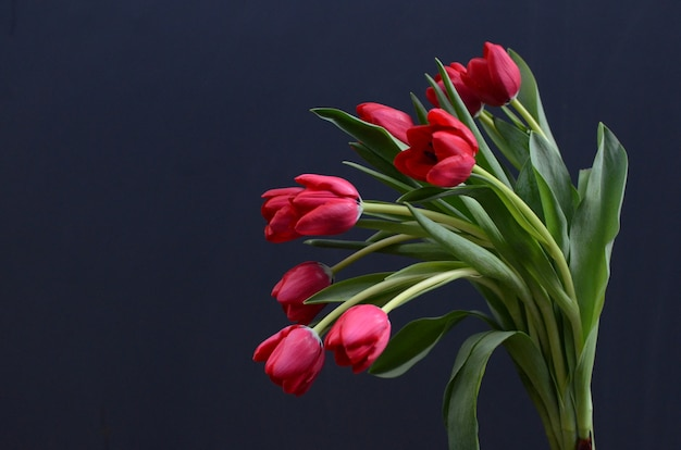 Fiore Di Tulipano Rosso Su Sfondo Nero Scaricare Foto Premium