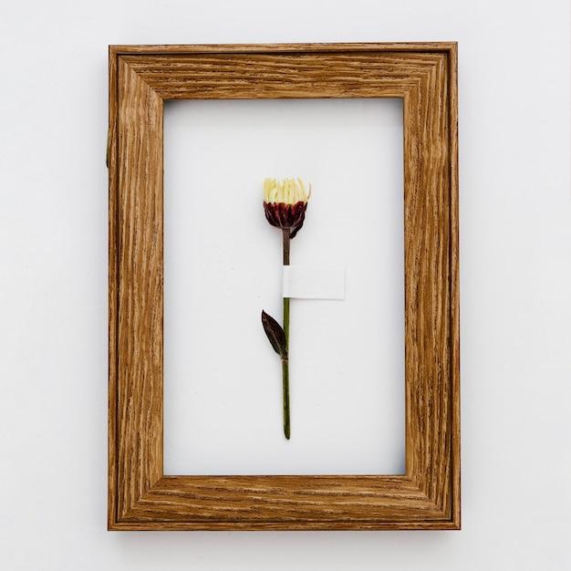 Fiore di vista superiore all'interno del telaio Foto Gratuite