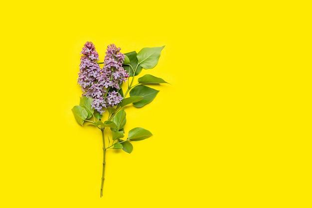 Fiore lilla su giallo Foto Premium