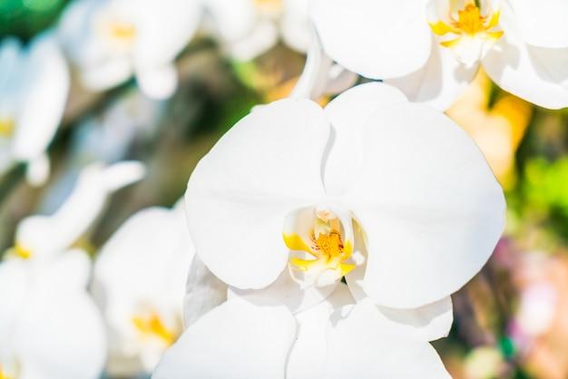 Fiore orchidea Foto Gratuite