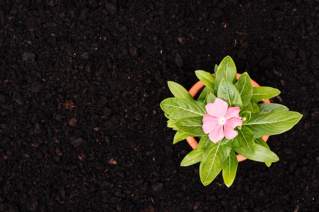Fiore piatto laico sul terreno Foto Gratuite