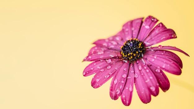 Fiore rosa con gocce d 39 acqua scaricare foto gratis for Finestra con gocce d acqua