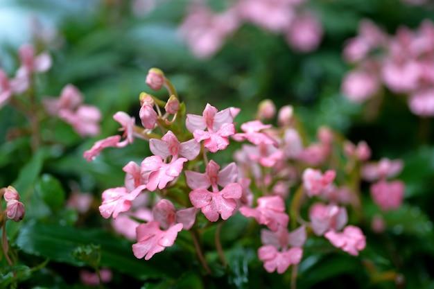 Fiore rosa vicino alla caduta dell'acqua Foto Premium