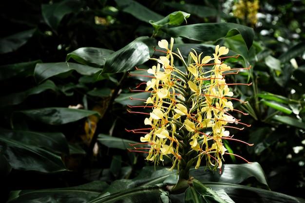 Fiore tropicale giallo con sfondo sfocato Foto Gratuite