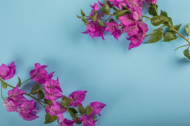 Fiore viola sulla cornice blu con spazio di copia Foto Gratuite