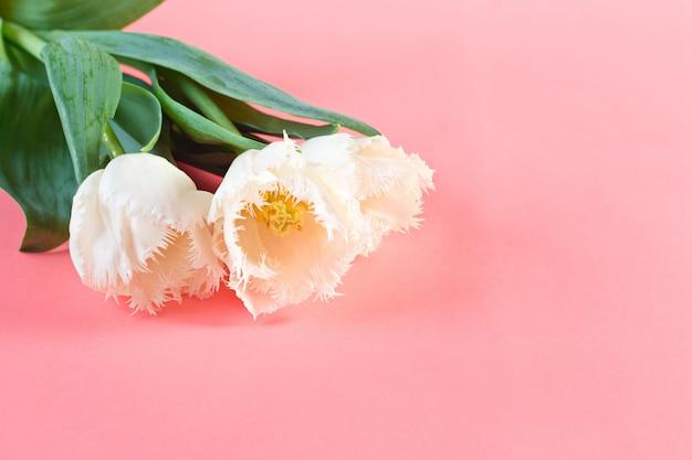 Fiori 8 marzo. festa della donna. complimenti. primavera. fiori di primavera. tulipani Foto Premium