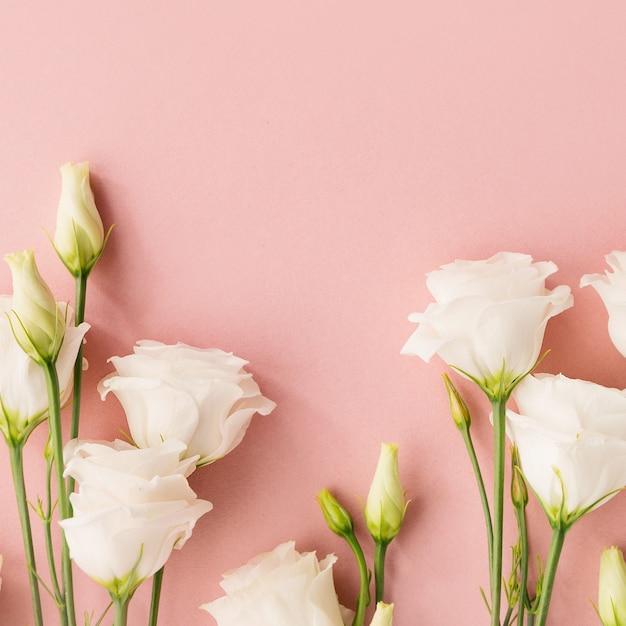 Fiori bianchi su sfondo rosa Foto Premium