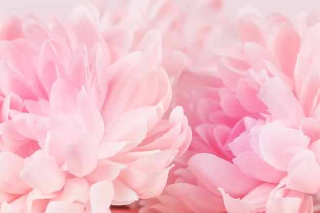 Fiori di crisantemo in tenui colori pastello e sfocatura dello sfondo Foto Premium