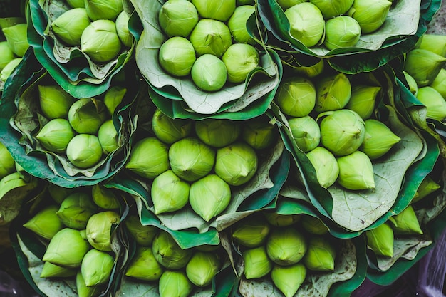 Fiori di loto verde Foto Premium