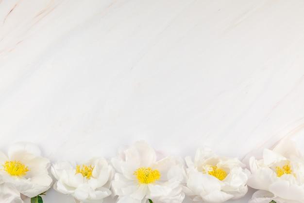 Fiori di peonia bianca su sfondo di marmo Foto Premium