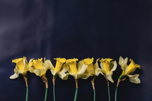 Fiori gialli dei daffodils su priorità bassa scura Foto Premium