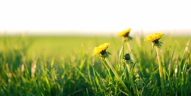 Fiori gialli in un campo Foto Gratuite