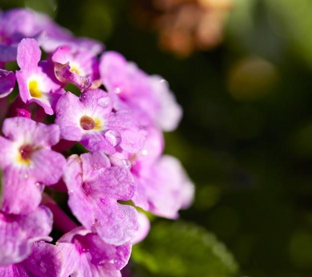 Fiori primaverili lilla Foto Premium