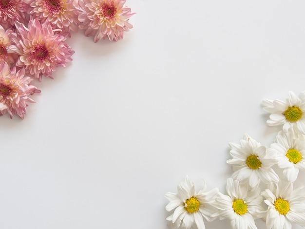 Fiori rosa e bianchi, quelli sono chiamati chrysanthemum, due angoli di cornice Foto Premium