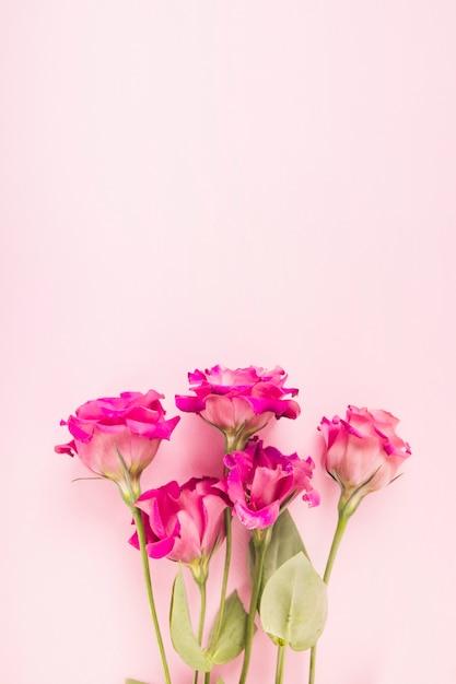 Fiori Rosa Su Sfondo Colorato Pastello Scaricare Foto Gratis