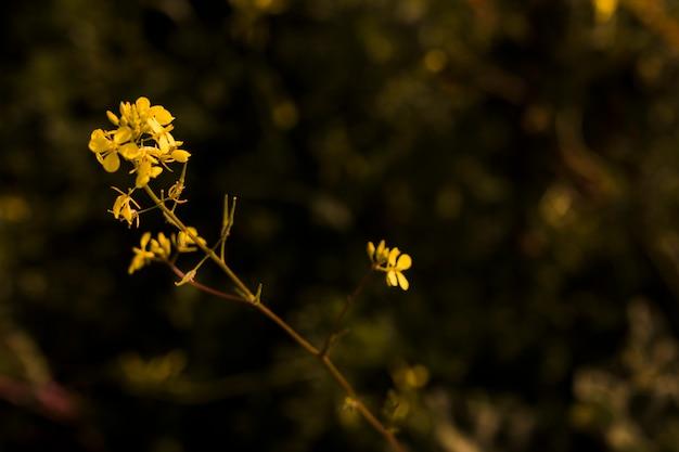 Fioritura di piccoli fiori gialli Foto Gratuite