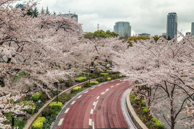 Fioritura sakura in un parco giapponese Foto Premium
