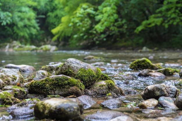 Fiume della montagna che attraversa la foresta verde. rapido flusso su roccia ricoperta di muschio Foto Gratuite