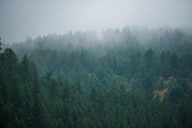 Foggy forest hill Foto Gratuite