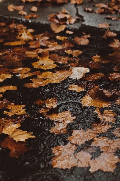 Fogli di autunno gialli in acqua su una strada allagata dal marciapiede Foto Gratuite