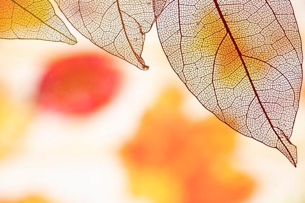 Fogli di autunno trasparenti astratti Foto Gratuite