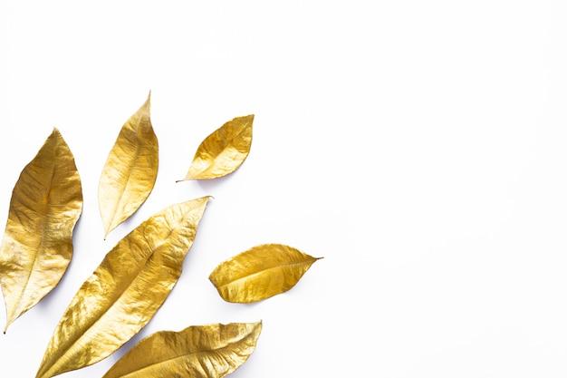 Fogli dorati dell'alloro asciutto isolati su priorità bassa bianca Foto Premium