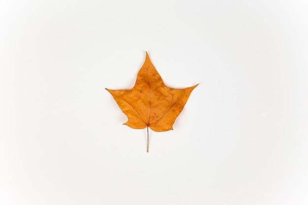 Foglia di acero gialla isolata su fondo bianco. concetto di autunno Foto Premium