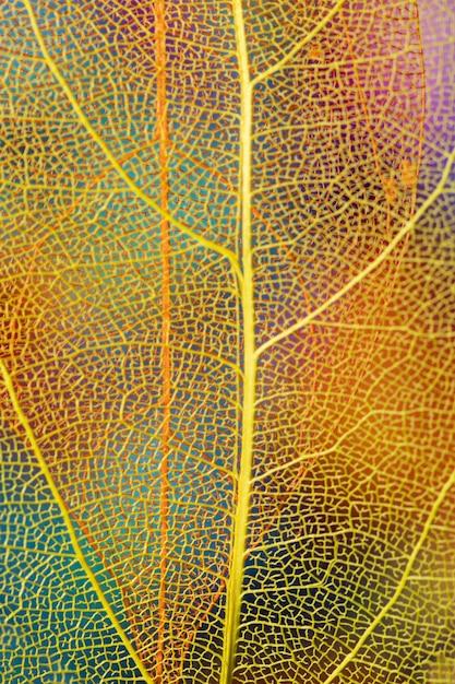 Foglia di autunno del primo piano con le vene gialle Foto Gratuite