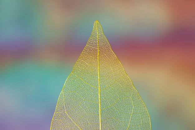 Foglia di autunno gialla trasparente chiara Foto Gratuite