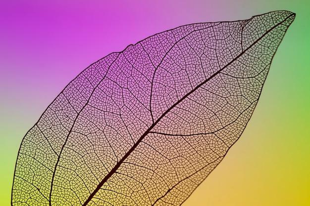 Foglia di autunno trasparente con sfondo vivido Foto Gratuite