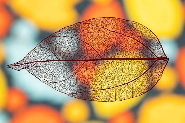 Foglia di autunno vivido trasparente astratto Foto Gratuite