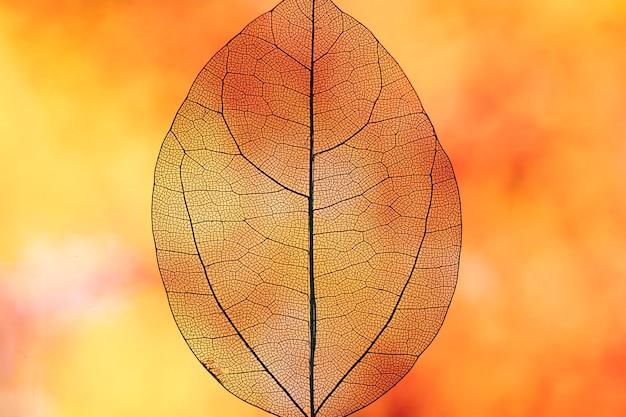 Foglia di caduta arancione trasparente astratta Foto Gratuite