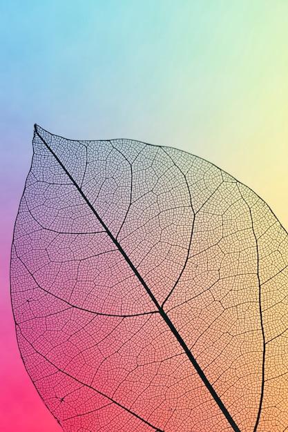 Foglia di caduta trasparente colorata vibrante Foto Gratuite