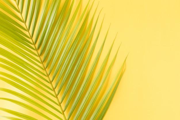 Foglia di cocco foto piatta laici su sfondo giallo, vista dall'alto e lo spazio della copia Foto Premium