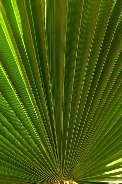 Foglia di palma pianta natura fan scaricare foto gratis for Pianta palma