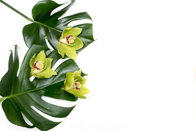 Foglia di palma tropicale di monstera su una priorità bassa bianca con l'orchidea verde Foto Premium