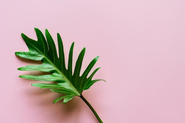 Foglia tropicale su sfondo rosa Foto Gratuite