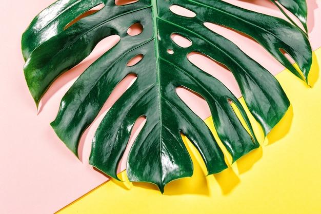 Foglia verde di monstera su giallo Foto Gratuite