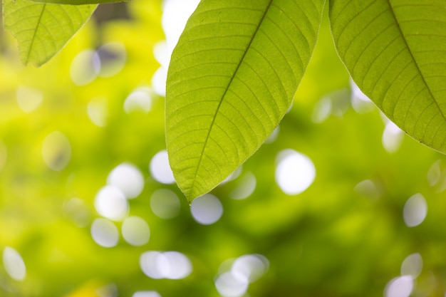 Foglia verde nella foresta Foto Gratuite