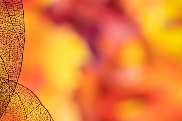 Fogliame di autunno arancione con spazio di copia Foto Gratuite