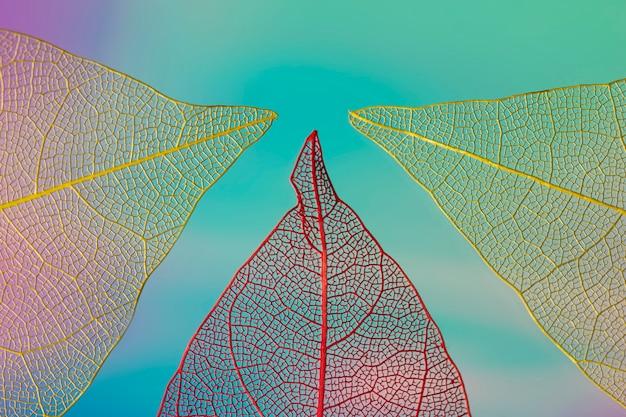 Fogliame di caduta colorato astratto Foto Gratuite