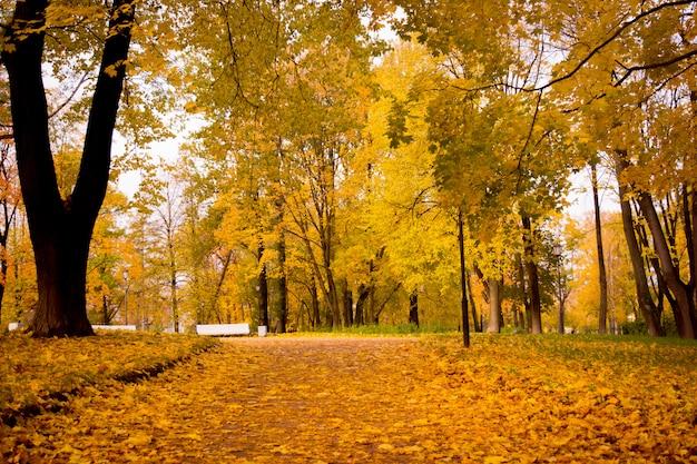 Fogliame dorato del parco autunnale Foto Premium