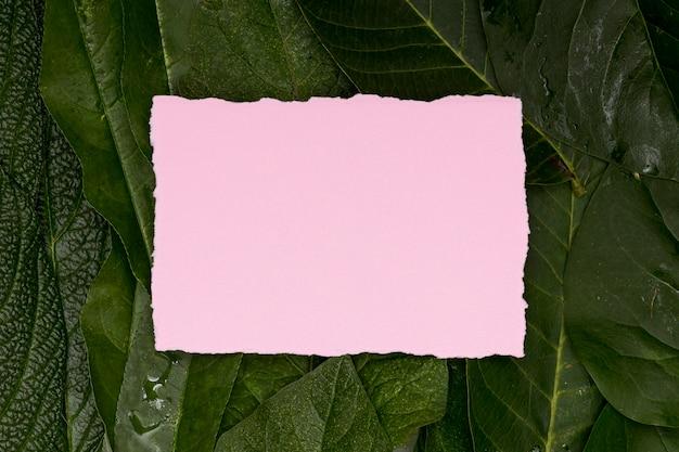 Fogliame tropicale con carta bianca rosa Foto Gratuite