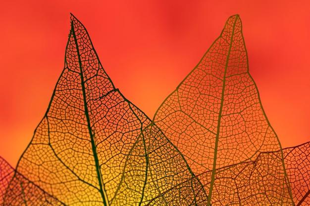 Foglie astratte con retroilluminazione rossa Foto Gratuite