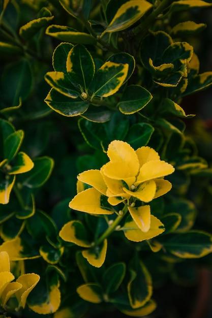 Foglie botaniche gialle nel giardino Foto Gratuite