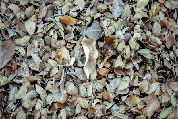 Foglie cadute autunno astratte di struttura del fondo su suolo forestale marrone Foto Premium