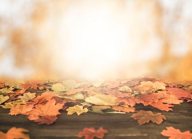 Foglie di autunno che si trova su terreno in legno Foto Gratuite