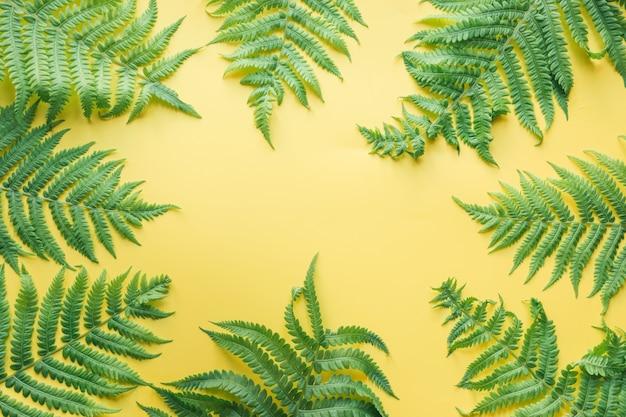 Foglie di confine di felce su giallo. vista dall'alto, estate. Foto Premium