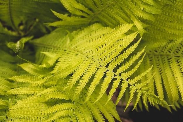 Foglie di felce in giardino. Foto Premium