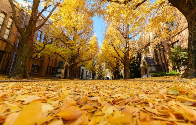 Foglie di ginkgo su strada, stagione autunnale in giappone Foto Premium